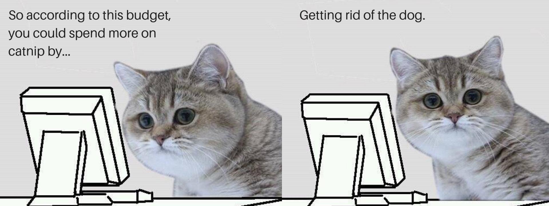 cat budget meme